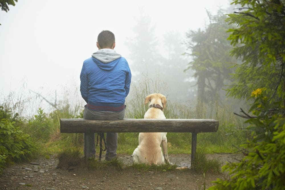Labrador Kosten