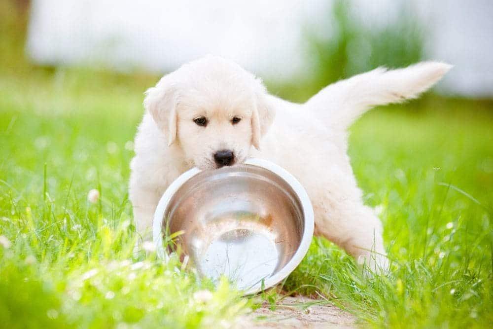 Labrador Welpenfutter