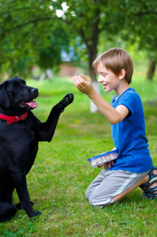 Labrador in Not - Kinder