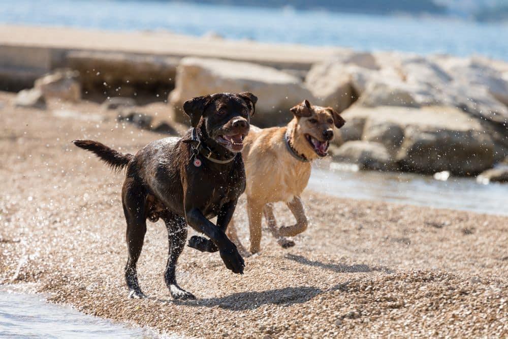 Mit Labrador in den Urlaub