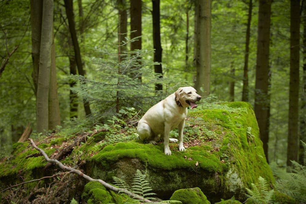Zecken lauern im Wald