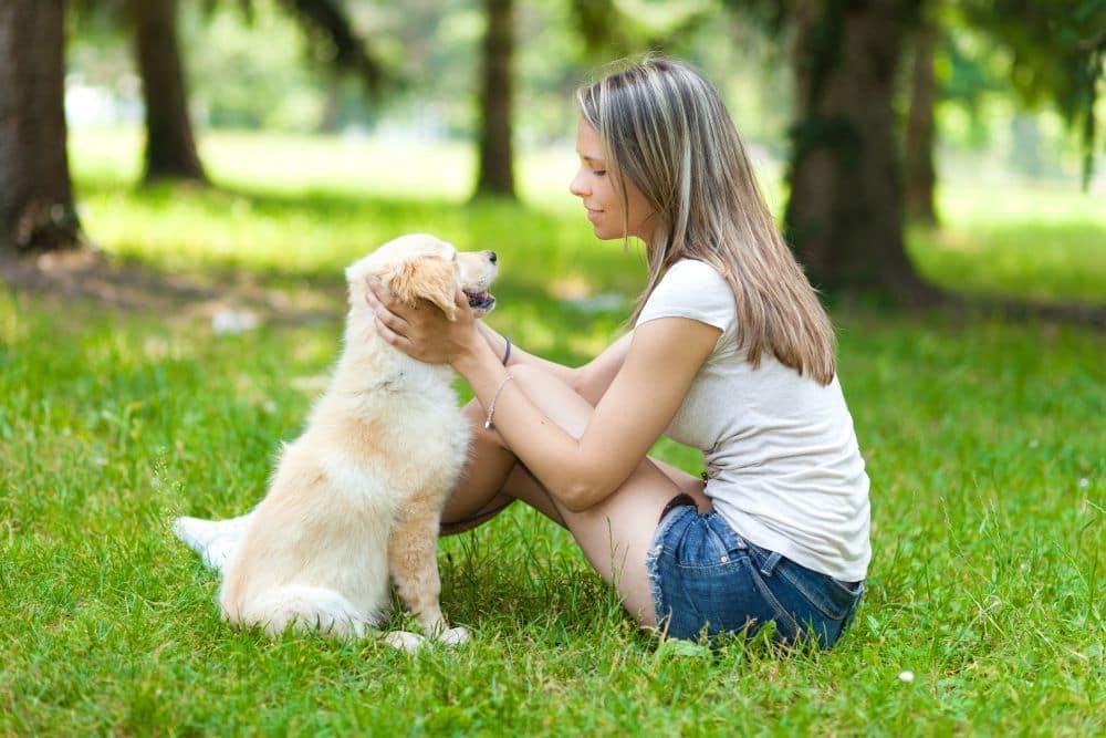 Wie kann ich die Lebenserwartung meines Labradors erhöhen?