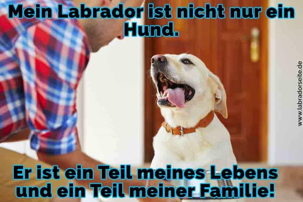 Ein hungriger Labrador