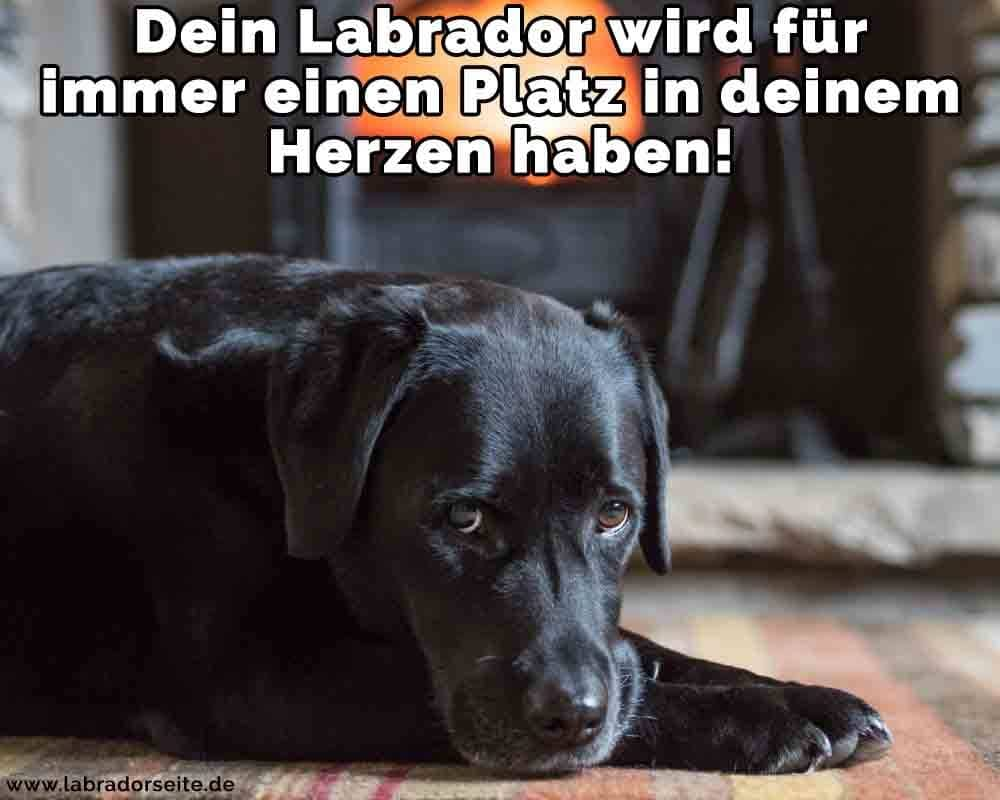 Ein Labrador liegt auf dem Boden