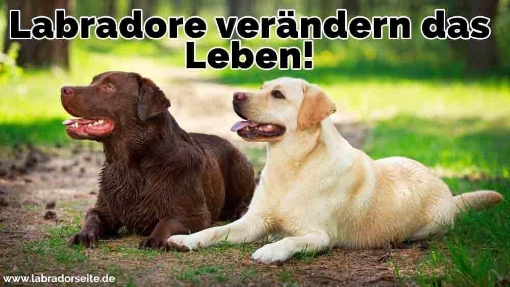 Zwei Labradore auf den Reisen