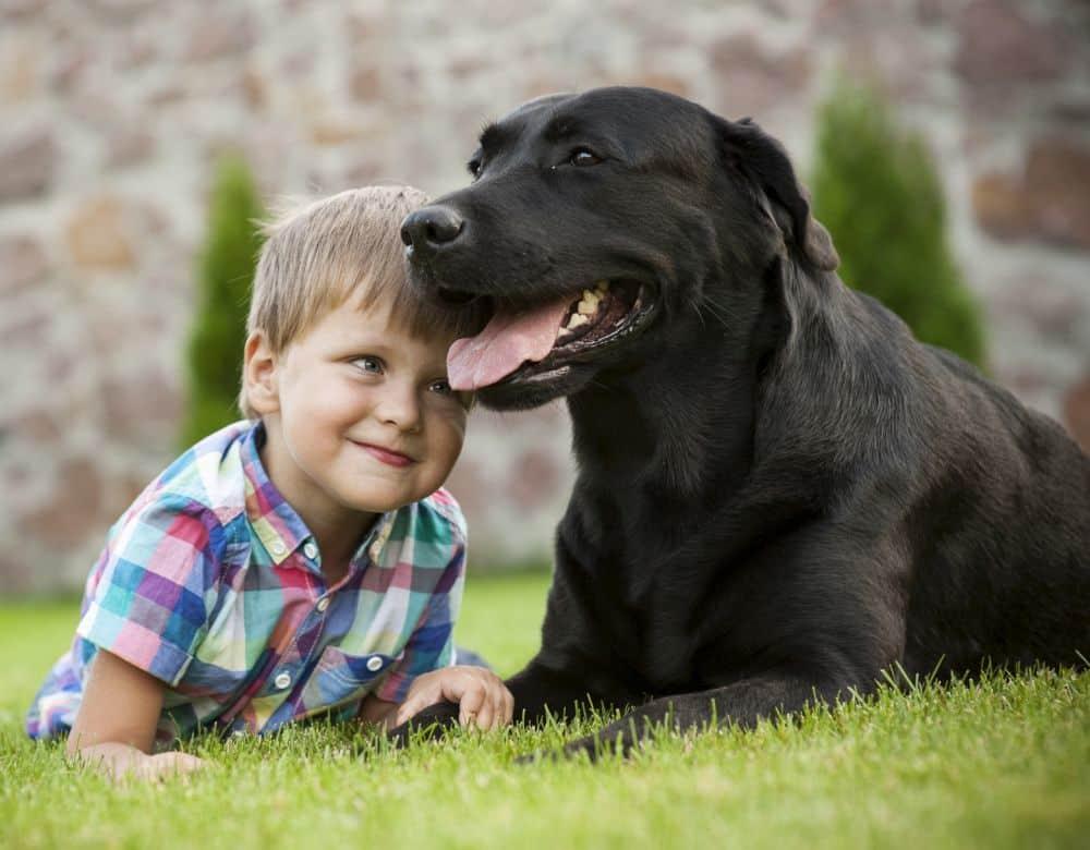 Schwarzer Labrador Retriever mit Junge