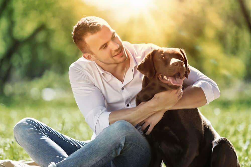 Labrador Retriever mit Mann