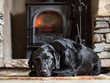 A black Labrador dog feeling cosy in front of the fire